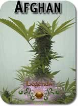 Legends_Afghan_Seeds