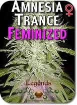 Legends_Amnesia_Trance_Feminized_Seeds