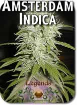 Legends_Amsterdam_Indica_Seeds