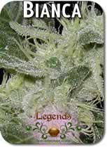 Legends_Bianca_Seeds