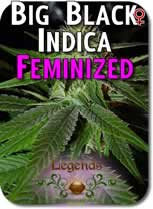 Legends_Big_Black_Indica_Feminized