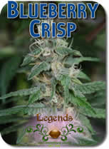 Legends_Blueberry_Crisp_Seeds