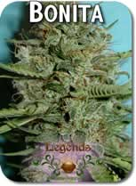 Legends_Bonita_Seeds