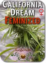 Legends_California_Dream_Feminized_Seeds
