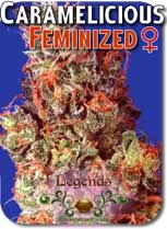 Legends_Caramelicious_Feminized_Seeds