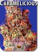 Legends_Caramelicious_Seeds