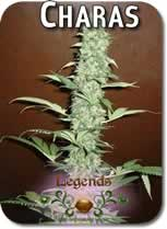 Legends_Charas_Seeds