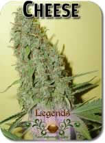 Legends_Cheese_Seeds