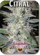 Legends_Citral_Seeds