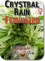 Legends_Crystal_Rain_Feminized_Seeds