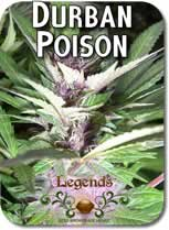 Legends_Durban_Poison_Seeds