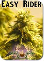 Legends_Easy_Rider_Seeds