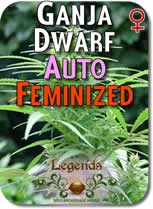 Legends_Ganja_Dwarf_AUTO_Feminized_Seeds
