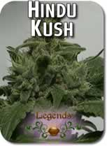 Legends_Hindu_Kush_Seeds