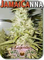 Legends_JamaiCanna_Seeds