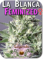 Legends_LaBlanca_Feminized_Seeds