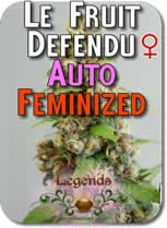 Legends_Le_Fruit_Defendu_AUTO_Feminized_Seeds