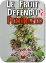 Legends_Le_Fruit_Defendu_Feminized_Seeds