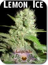 Legends_Lemon_Ice_Seeds