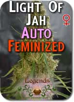 Legends_Light_of_Jah_AUTO_Feminzed_Seeds