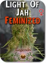 Legends_Light_of_Jah_Feminzed_Seeds