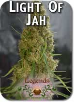 Legends_Light_of_Jah_Seeds