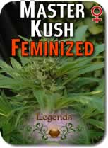 Legends_Master_Kush_Feminized_Seeds
