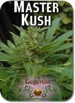 Legends_Master_Kush_Seeds