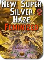 Legends_New_Super_Silver_Haze_Feminized_Seeds