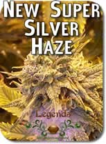 Legends_New_Super_Silver_Haze_Seeds