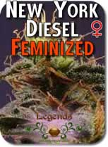 Legends_New_York_Diesel_Feminized_Seeds