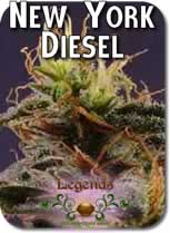 Legends_New_York_Diesel_Seeds