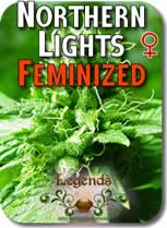 Legends_Northern_Lights_Feminized_Seeds