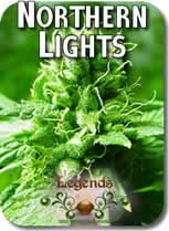 Legends_Northern_Lights_Seeds