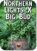 Legends_Northern_Lights_X_Big_Bud_Seeds