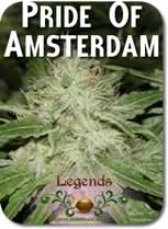 Legends_Pride_of_Amsterdam_Seeds