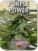 Legends_Purple_Power_Seeds