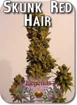 Legends_Skunk_Red_Hair_Seeds