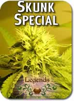 Legends_Skunk_Special_Seeds