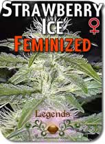 Legends_Strawberry_Ice_Feminized_Seeds