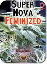 Legends_Supernova_Feminized_Seeds