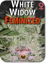 Legends_White_Widow_Feminized_Seeds