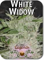 Legends_White_Widow_Seeds