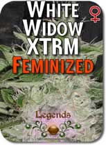 Legends_White_Widow_XTRM_Feminized_Seeds