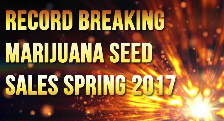 Record Breaking Marijuana Seed Sales Spring 2017
